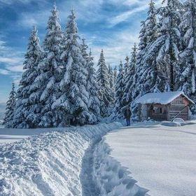 Winterliebend