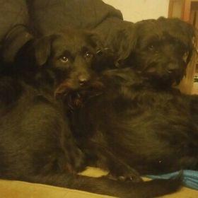 MARKIESJE Dog Paw Puppy Name Breed Polo Shirt Clothes Men Women
