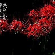 Bỉ Ngạn Hoa