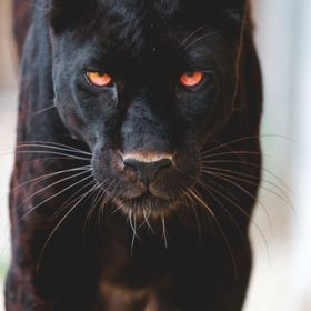 Efi panther