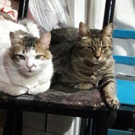 Nilo&titi