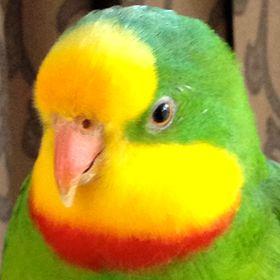 Let's Talk Birds