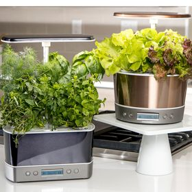 quick-fixes-for-your-AeroGarden-at-home
