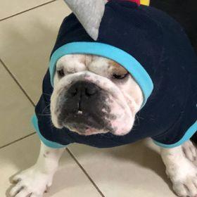 Huxley The Bulldog