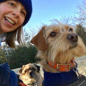 Scruffy Little Terrier   Dog Blogger ~ The Home For Dog Lovers