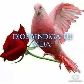 Luz Dary Pelaez G