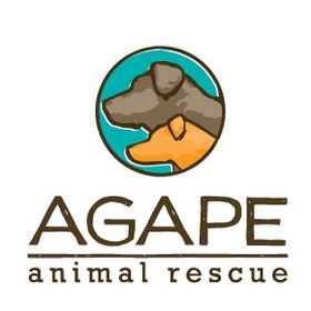 Agape Animal Rescue Agaperescue Profile Pinterest