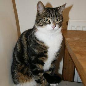 Kat .