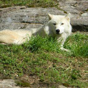 Lone Wolf Coglan