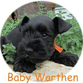 Debby Warthen