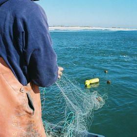 Seaview Crab Company