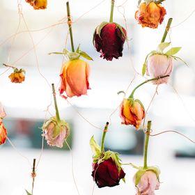 Hermetica Flowers