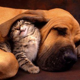 Las Palmas Pet Clinic