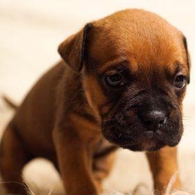 "New Scottish Terrier Dog 100/% Wool Petite Needlepoint Pillow 14/"" Square"