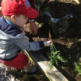 Gardening With Boys | Growing with Toddlers & Preschoolers