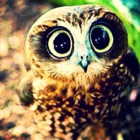 Demigod Owl