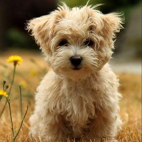 Dog Furious