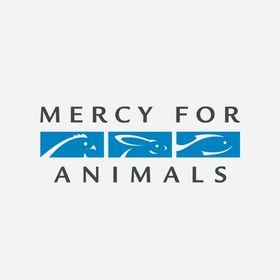 Mercy For Animals-Latinoamérica