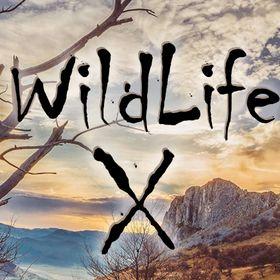 Wildlife X