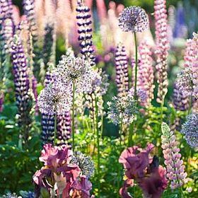 Wild Flower Designs