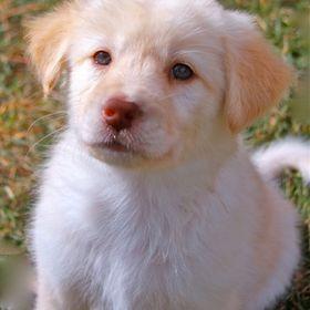 Xanadu Designer Dogs