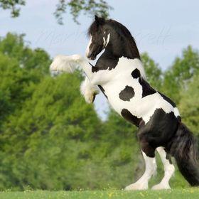 LOVE.HORSE
