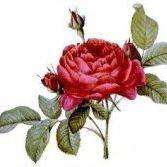 Rose Tremlett
