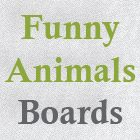 Funny Animals Boards