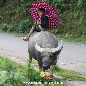 Palm Vietnam Travel