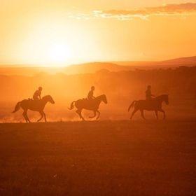 African Horse Safaris - Travel Agency