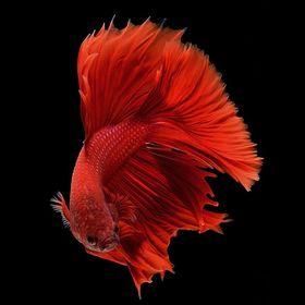 livetropicalfish