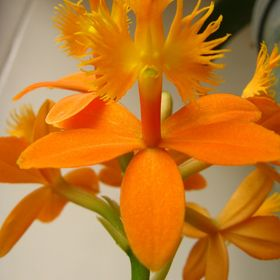 Cool Orchids