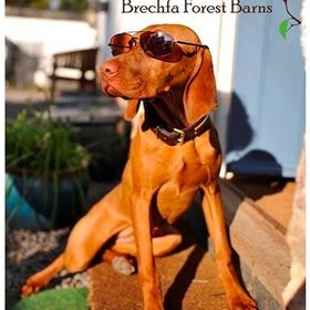brechfa forest barns totally dog friendly holiday cottages rh pinterest co uk