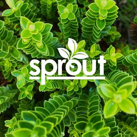 Sprout Something