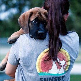 Sunset Veterinary Clinic (SunsetVet) on Pinterest