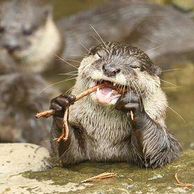 Mama Otter