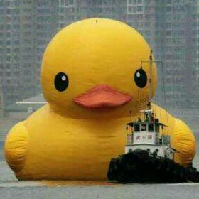 the anonymous duck