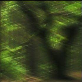 raempel - der Wald und Natur Blog für Lesefreunde ;)