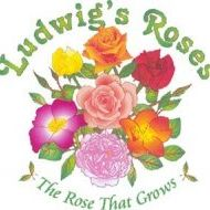 Ludwig's Roses