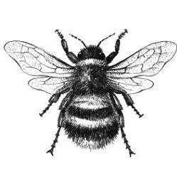 Bee Ridge Lighting and Design