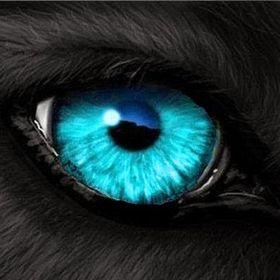blackwolf 00