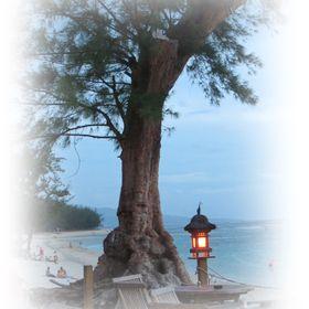 Leinwandbild Canvas Wandbilder Kunstdruck Natur Landschaft magischer Baum Neu