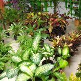 HarithTharang Garden Shop