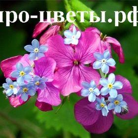 про-цветы.рф