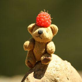 Turboo Bear