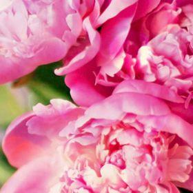 fotos_flores
