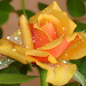 Virág Kiss