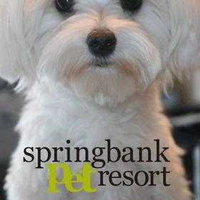 Springbank Pet Resort