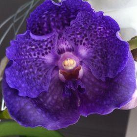 Saverio Orchid