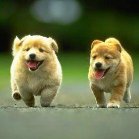 8 Cara Melatih Anjing Ideas Dogs Your Dog Dog Training